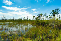 佛罗里达自然保护区 免版税库存图片