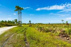 佛罗里达自然保护区 库存照片