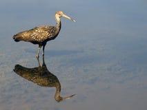 佛罗里达野生生物 免版税库存照片