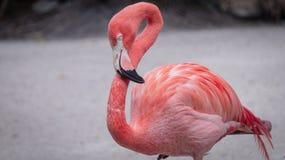 佛罗里达野生生物 库存照片