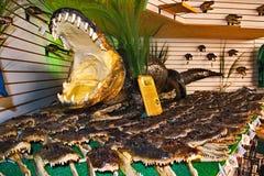 佛罗里达鳄鱼纪念品 免版税库存图片