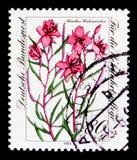 佛莱谢杨柳草本,福利:危险的高山花serie,大约1983年 免版税库存图片