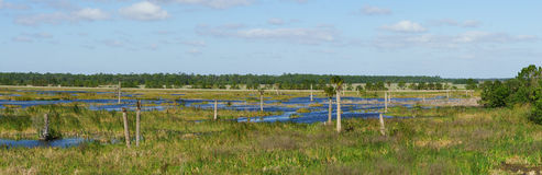 作为一片人造沼泽地被创造的水的全景 免版税库存照片