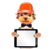 作为与片剂个人计算机的建造者穿戴的狗 免版税库存图片