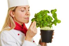作为厨师厨师嗅到的蓬蒿草本的妇女 免版税库存图片