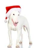 作为圣诞老人的圣诞节狗。 免版税库存图片