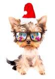 作为圣诞老人的圣诞节狗与党玻璃 库存图片