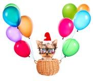 作为圣诞老人的圣诞节狗与气球 免版税库存照片