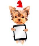作为圣诞老人的圣诞节狗与片剂个人计算机 库存图片