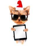 作为圣诞老人的圣诞节狗与片剂个人计算机 免版税库存图片