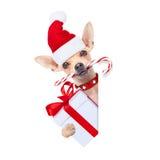 作为圣诞老人的圣诞节狗 库存图片