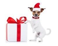 作为圣诞老人的圣诞节狗 免版税库存图片