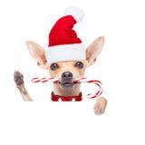 作为圣诞老人的圣诞节狗 库存照片