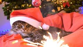 作为圣诞老人的滑稽的缅因树狸猫戴着圣诞节帽子坐枕头在一棵美丽的新年装饰的树和 免版税库存照片