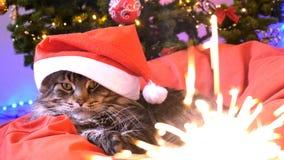 作为圣诞老人的滑稽的缅因树狸猫戴着圣诞节帽子坐枕头在一棵美丽的新年装饰的树和 库存图片