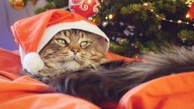 作为圣诞老人的滑稽的缅因树狸猫戴着圣诞节帽子坐枕头在一棵美丽的新年装饰的树 免版税库存照片