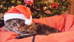 作为圣诞老人的滑稽的缅因树狸猫戴着圣诞节帽子坐枕头在一棵美丽的新年装饰的树 图库摄影