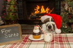 作为圣诞老人穿戴的一条逗人喜爱的狗 免版税库存图片
