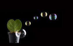 作为在与肥皂watter的黑色隔绝的心脏的绿色仙人掌起泡 库存图片