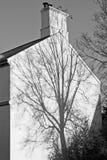 作为在白色墙壁上的一个阴影被概述的树结构 免版税库存图片