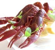 作为小龙虾的开胃菜 库存照片