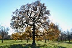 作为想法的树 免版税库存图片