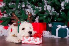 作为新年的标志的圣诞节狗 库存照片