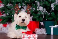 作为新年的标志的圣诞节狗 图库摄影