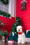 作为新年的标志的圣诞节狗 免版税库存图片