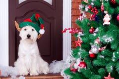 作为新年的标志的圣诞节狗 免版税图库摄影
