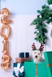 作为新年的标志的圣诞节狗 免版税库存照片