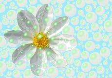 作为新鲜的雏菊 图库摄影