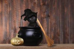 作为有帽子和笤帚的一个万圣夜巫婆穿戴的可爱的小猫 库存照片