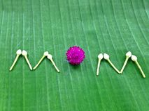 作为泰国的标志的母亲节花 库存照片