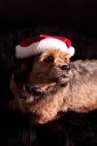 作为狗圣诞老人 图库摄影