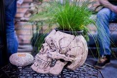 作为的花盆一块人的头骨 侧视图 装饰罐 内部花瓶 创造性的罐 免版税库存照片
