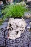 作为的花盆一块人的头骨 正面图 装饰罐 内部花瓶 创造性的罐 库存图片