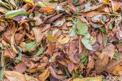 作为秋季背景或纹理的叶子堆 免版税库存照片