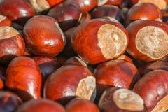 作为秋季背景的发光的棕色栗子 库存图片