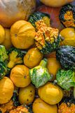 作为秋季背景的各种各样的装饰南瓜 免版税图库摄影