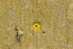作为绝热被安装的矿物纤维板纹理附加有机械紧固件的墙壁 库存图片