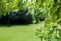 作为背景使用的一个美妙的夏天绿色公园 概念健康生活方式 季节性背景 休息的C美丽的公园 免版税库存图片
