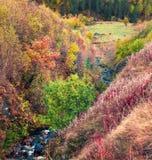 作为背景使用的高加索山脉的五颜六色的秋天森林 免版税图库摄影