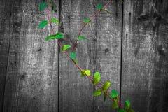 作为背景使用的高质量木纹理-木头 免版税库存图片
