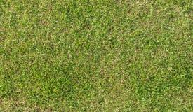 作为背景或纹理的绿色被修剪的草坪 免版税图库摄影