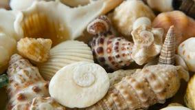 作为背景的不同的混杂的五颜六色的贝壳 各种各样的珊瑚、海洋软体动物和扇贝壳 股票录像