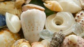 作为背景的不同的混杂的五颜六色的贝壳 各种各样的珊瑚、海洋软体动物和扇贝壳 股票视频