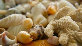 作为背景的不同的混杂的五颜六色的贝壳 各种各样的珊瑚、海洋软体动物和扇贝壳 影视素材
