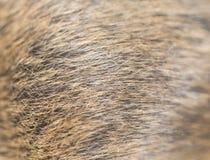 作为背景的动物毛皮 免版税图库摄影