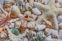 作为背景的混杂的五颜六色的海壳 免版税库存图片